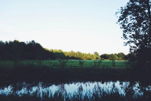 fieldspic