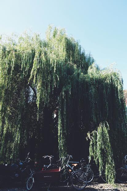 willowsandbikes